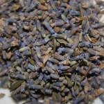 Wild Tibetan Lavender